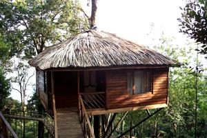 Cheap Tree House Vacations Cheap Tree Houses