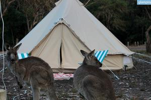Cozy Tent Rentals with Flexible Location For Tent Camping Near Sydney