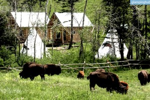Lovely Log Cabins on Bison Ranch with Western Flair in Montana