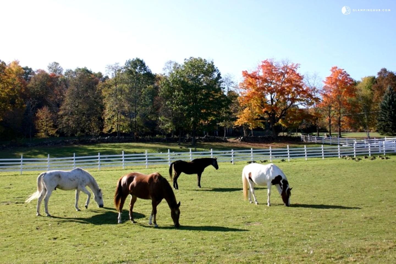 Peaceful Homey Cottage Accommodation on Scenic Farm near Albany