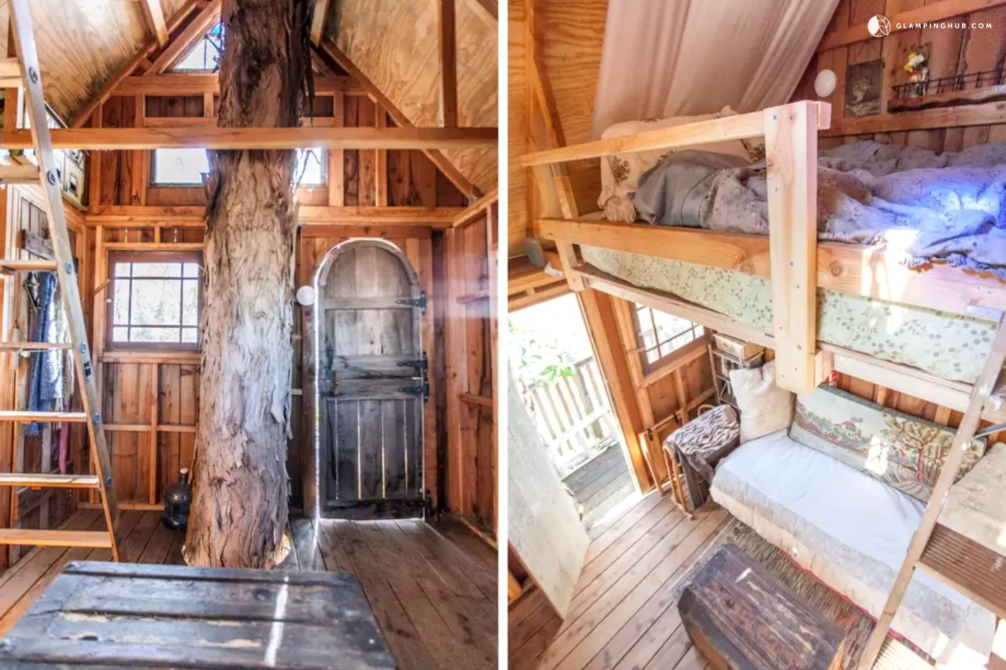 Tree House In Sonoma Wine Country